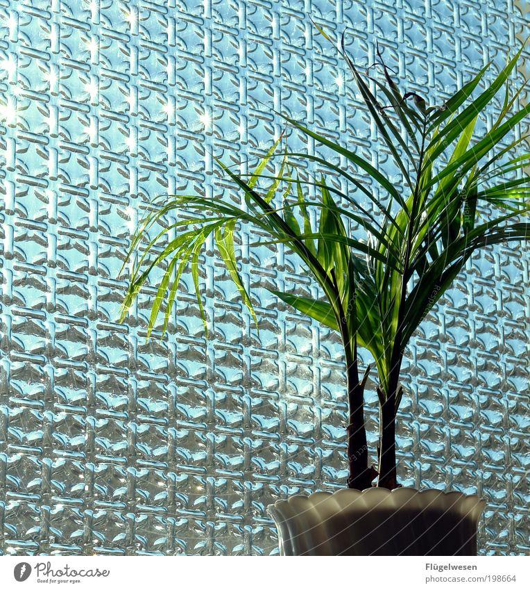 Plant Window Simple Beautiful weather Window pane Flowerpot Foliage plant Houseplant Pot plant X-rayed Window seat Window decoration