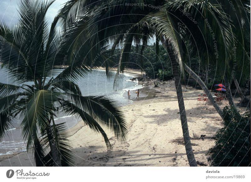 Water Ocean Summer Beach Vacation & Travel Idyll Palm tree Paradise