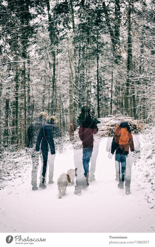 (3 + 1) x 2. Human being Environment Nature Winter Snow Tree Forest Animal Dog Relaxation Going Pink Joie de vivre (Vitality) Together To go for a walk
