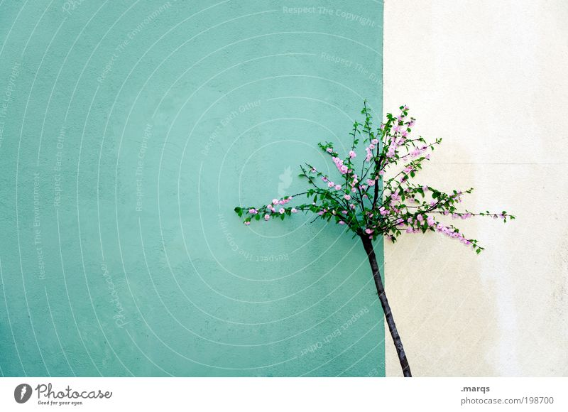 White Green Beautiful Tree Plant Loneliness Colour Wall (building) Small Wall (barrier) Pink Facade Fresh Esthetic Growth Transience