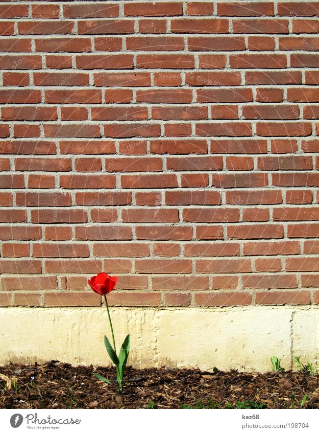 Nature Beautiful Plant Red Flower Loneliness House (Residential Structure) Life Wall (building) Blossom Garden Building Wall (barrier) Spring Park Church