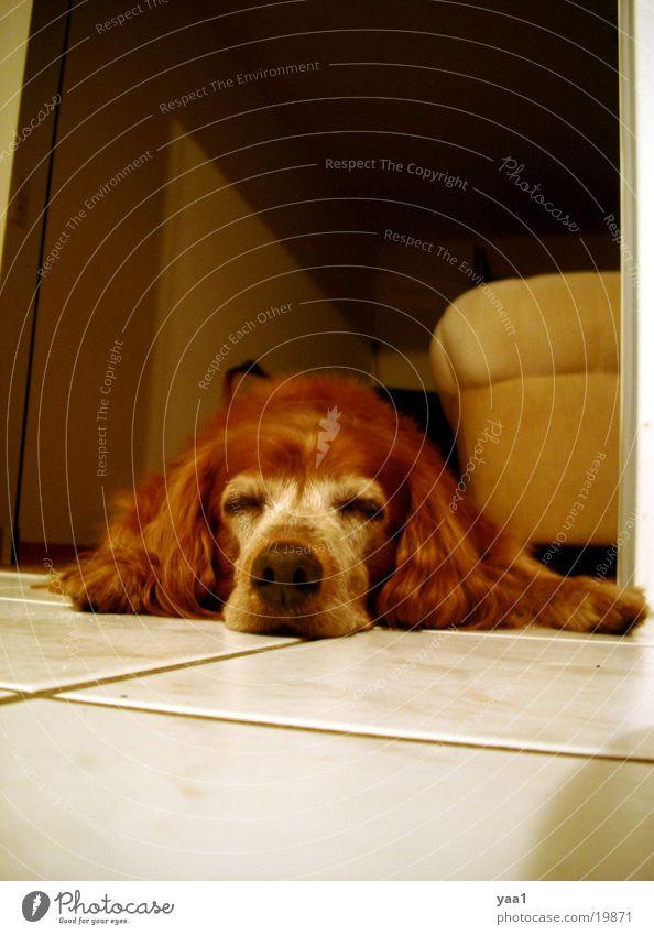 My dog Margo Dog Flat (apartment) Sleep on the ground
