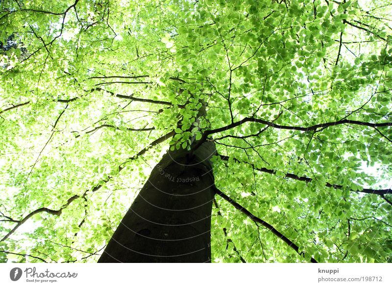Green canopy Trip Freedom Summer Summer vacation Sun Nature Jogging Renewable energy Environment Plant Sky Spring Beautiful weather Tree Wild plant Park Forest
