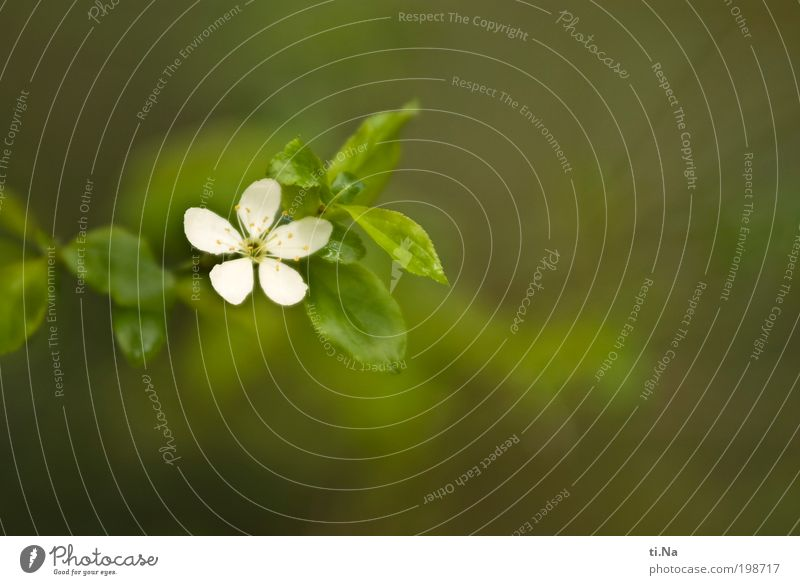 Nature White Green Calm Animal Life Relaxation Warmth Landscape Contentment Bright Environment Esthetic Growth Profession