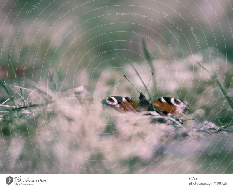 Colours of a butterfly Environment Nature Landscape Plant Animal Grass Bushes Wild plant Meadow Wild animal Butterfly 1 Wait Bright Beautiful Original Retro
