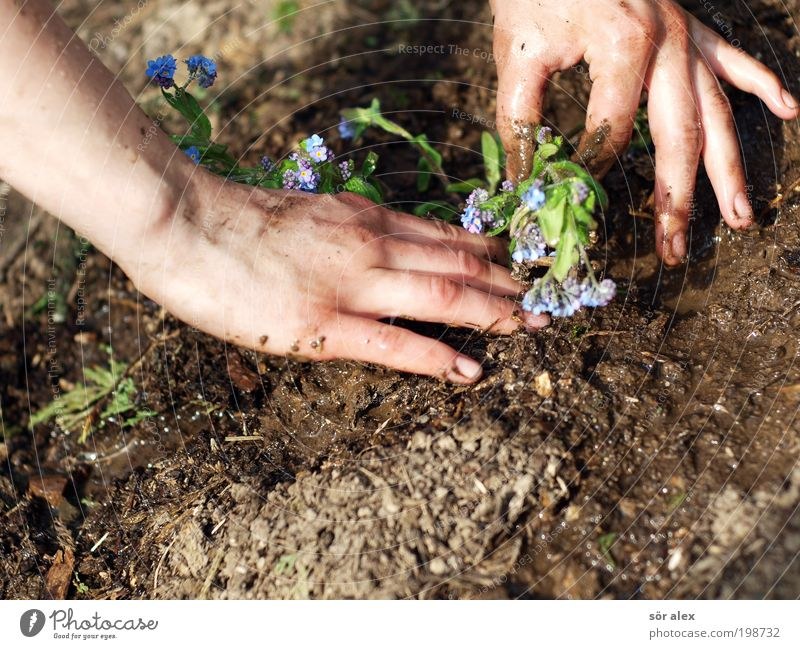 Forget-me-not the Second Feminine Hand Earth Spring Plant Flower Garden Work and employment Blossoming Growth Beautiful Blue Brown Green Spring fever Calm