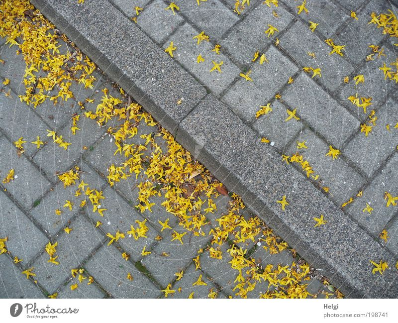 faded... Environment Spring Blossom Village Traffic infrastructure Street Sidewalk Stone Concrete Blossoming Lie Faded To dry up Authentic Sharp-edged Small