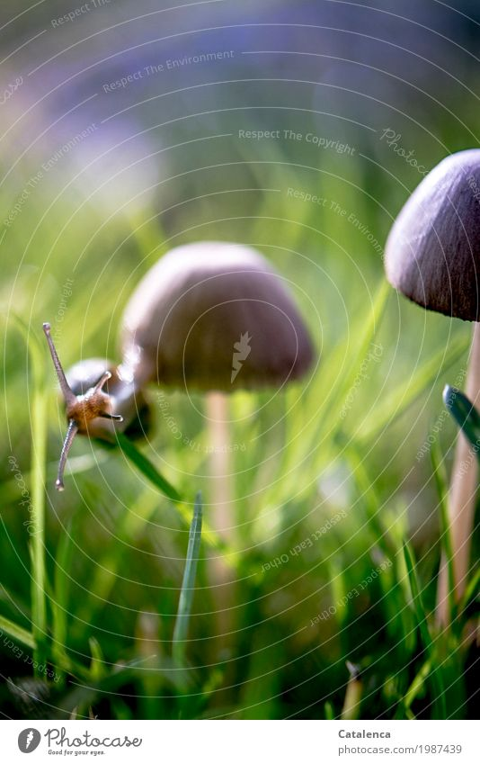 hang out Nature Plant Animal Autumn Beautiful weather Grass Mushroom Meadow Snail 1 Movement Hang Athletic Glittering Slimy Brown Green Violet Black Optimism