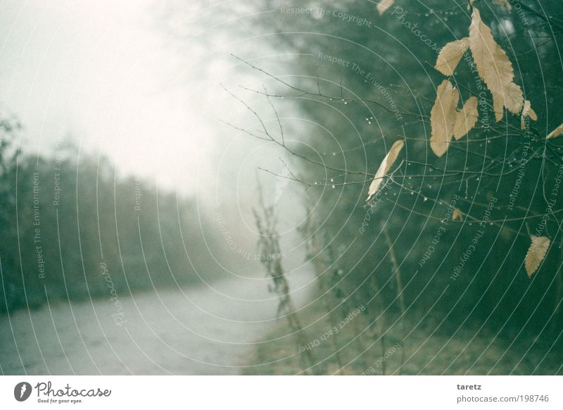 Old Winter Calm Leaf Loneliness Autumn Gray Lanes & trails Bright Fog Drops of water Bushes Transience Dew Twig Water