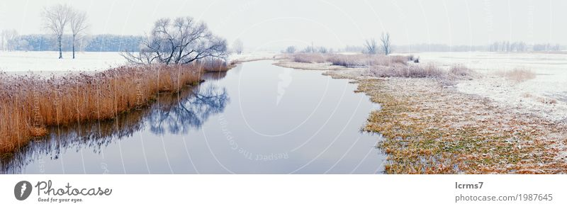 Winter landscape on Havel River (Germany). Havelland Vacation & Travel Snow Hiking Nature Blue Brown Yellow river Brandenburg willow tree Europe snowy sun water
