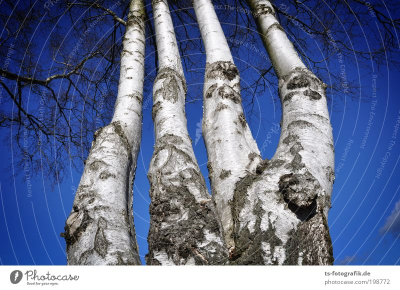 Sky Nature Blue Hand White Tree Plant Winter Landscape Autumn Wood Air Weather Climate Fingers Threat