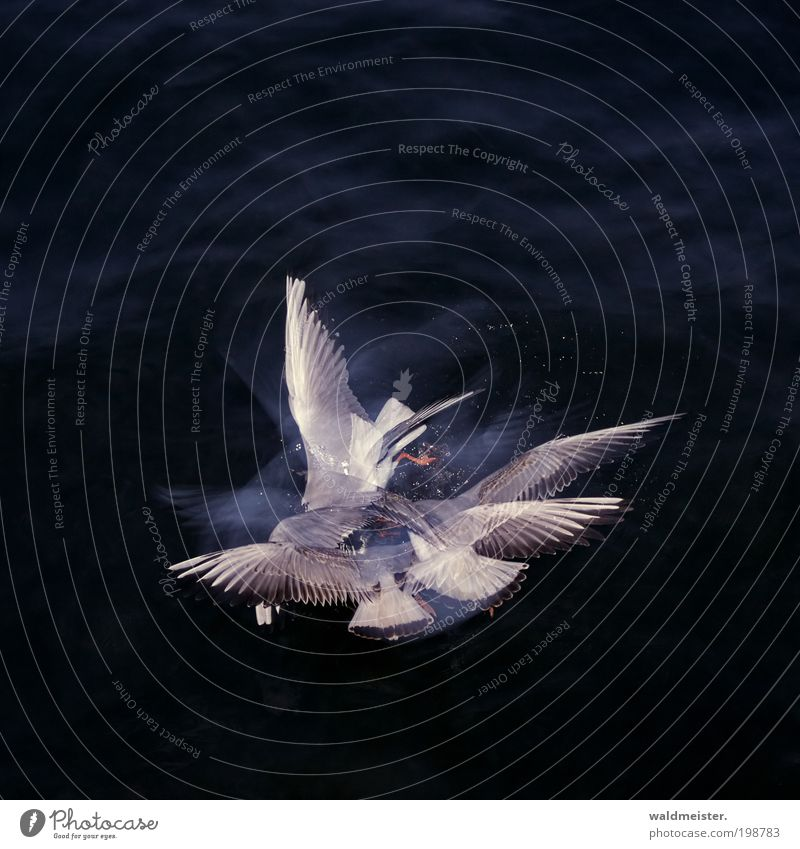 Water Blue Animal Gray Bird Flying Abstract Group of animals Wing Experimental Wild animal To feed Seagull Double exposure Competition