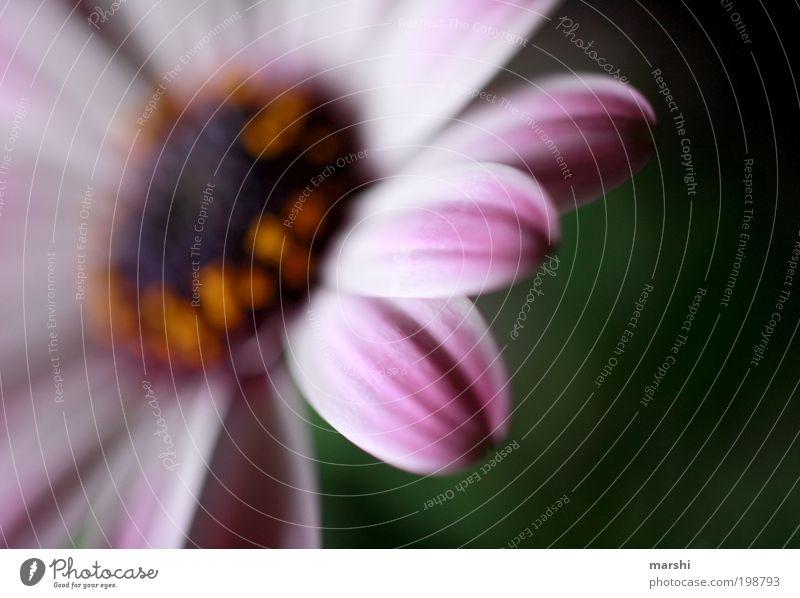 Nature Beautiful Flower Plant Blossom Pink Delicate Blossoming Blossom leave Pistil