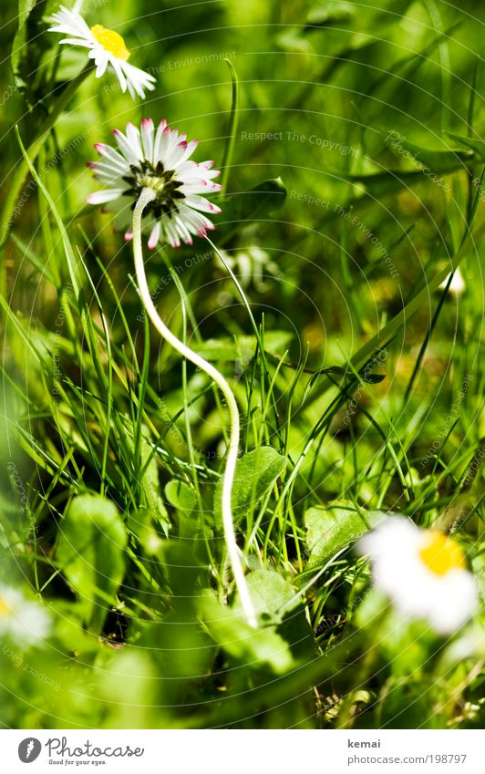 Nature White Sun Flower Green Plant Summer Yellow Meadow Blossom Grass Spring Warmth Power Environment Earth
