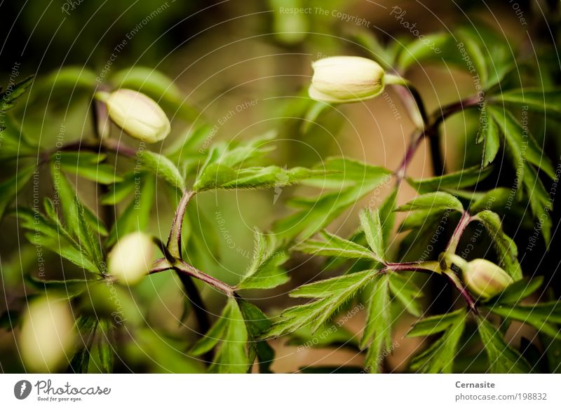 Road to Confusion Nature White Green Plant Flower Leaf Dark Spring Brown Ground Many Beautiful weather Blossoming Fragrance Irritation Labyrinth
