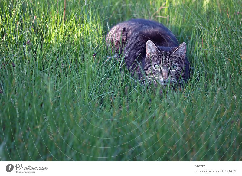 Cat Nature Plant Summer Green Animal Spring Grass Garden Brown Observe Concentrate Watchfulness Pet Animal face Attentive