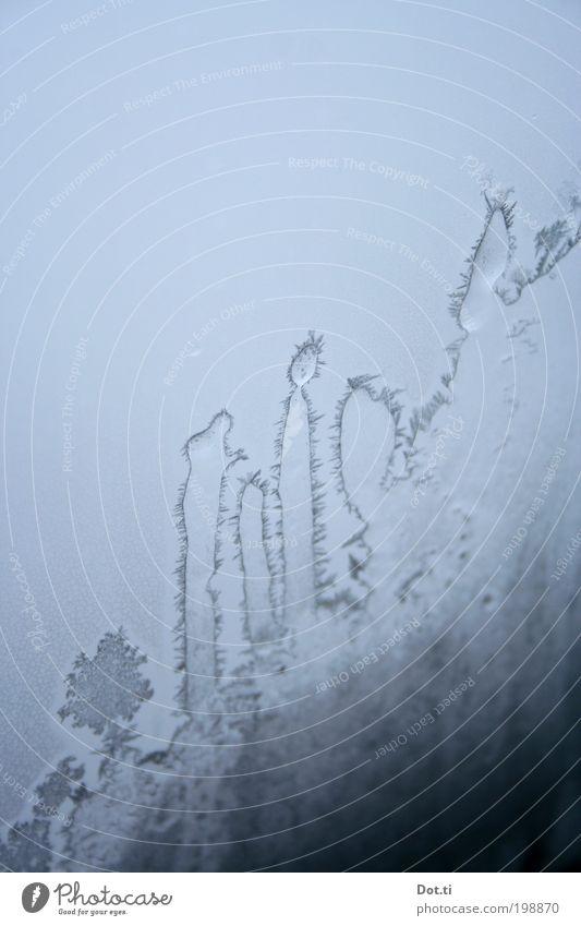 Winter Cold Ice Frost Frozen Transparent Bizarre Window pane Cactus Thorny Frostwork