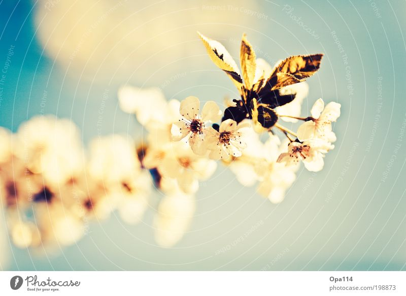 Sky Nature Blue White Green Tree Plant Sun Summer Animal Yellow Environment Spring Garden Blossom Dream