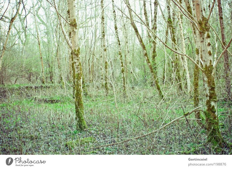 nature reserve Environment Nature Plant Spring Summer Tree Grass Bushes Moss Forest Wood Green To go for a walk Nature reserve Environmental protection