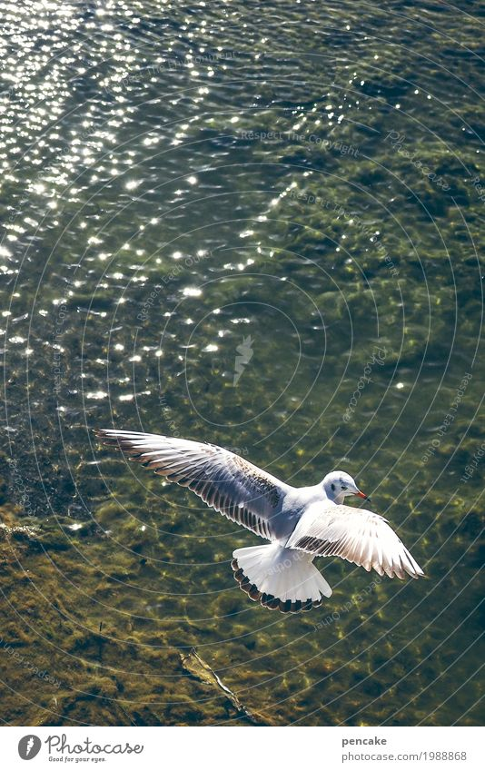 watch television Nature Landscape Elements Water Lakeside Animal Farm animal Bird 1 Flying Elegant Free Happiness Happy Seagull Lake Constance Colour photo