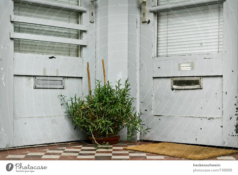 Old Plant Leaf House (Residential Structure) Architecture Gray Door Bushes Tile Mailbox Rent Neighbor Foliage plant Financial Industry Mosaic