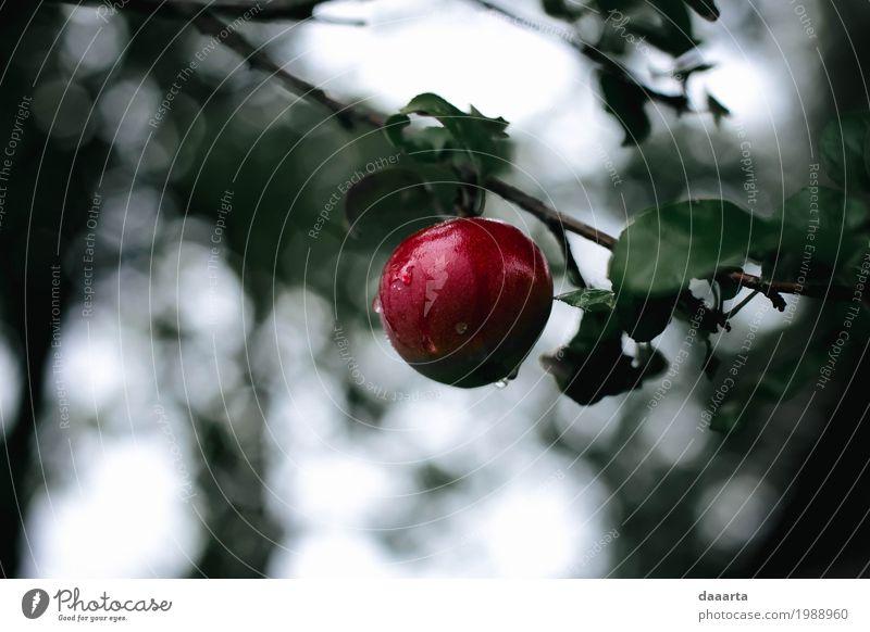 red delicious Food Fruit Apple Lifestyle Elegant Style Design Joy Leisure and hobbies Nature Plant Beautiful weather Rain Tree Leaf Wild plant Garden Park Sweet