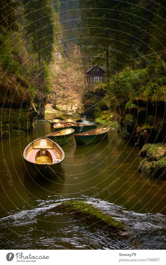 At the Kamnitz Adventure Nature Water Tree Moss Forest Rock Canyon Brook River Hut Boating trip Rowboat Wood Green Calm Relaxation Leisure and hobbies Peace