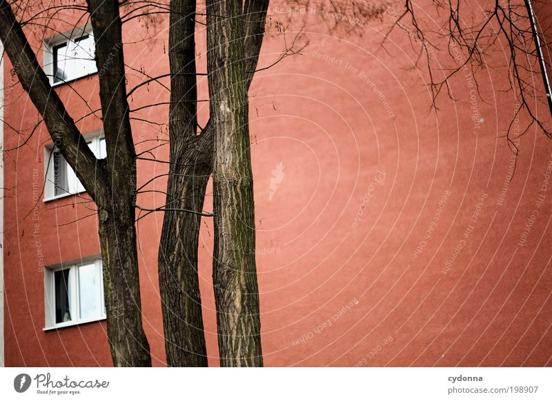 City Tree Red Calm Loneliness House (Residential Structure) Life Wall (building) Window Freedom Environment Architecture Dream Wall (barrier) Time
