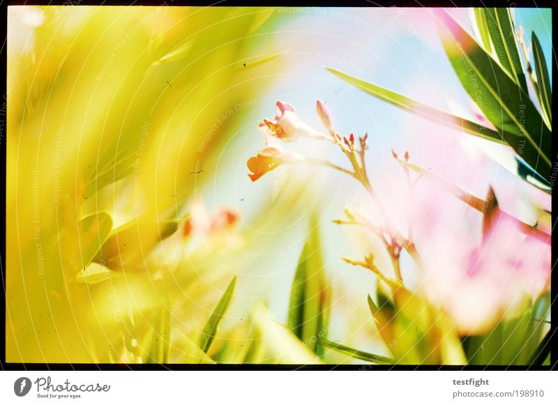 Sun Flower Plant Summer Leaf Animal Blossom Dye Warmth Fresh Sunbeam Friendliness Fragrance Light