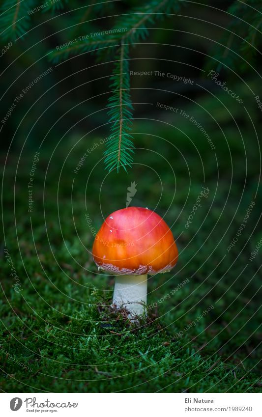 A little man stands in the forest ... Intoxicant Leisure and hobbies Trip Freedom Expedition Hiking Oktoberfest Nature Plant Animal Earth Autumn Moss Mushroom