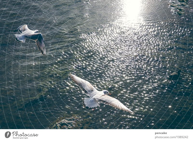 updraft Nature Landscape Elements Water Beautiful weather Lake Bird 2 Animal Joy Happy Happiness Enthusiasm Free Seagull Gull birds Waves Lake Constance