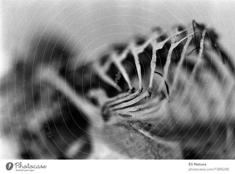 perishance Dead animal Chick Bird 1 Animal Creepy Black White Pain Fear Horror Distress Embitterment Stagnating Death Decline Transience Analog Skeleton