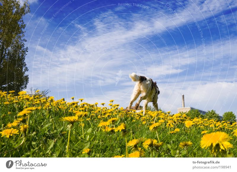Nature Sky Flower Green Plant Summer Joy Clouds Animal Yellow Jump Blossom Grass Spring Happy Dog