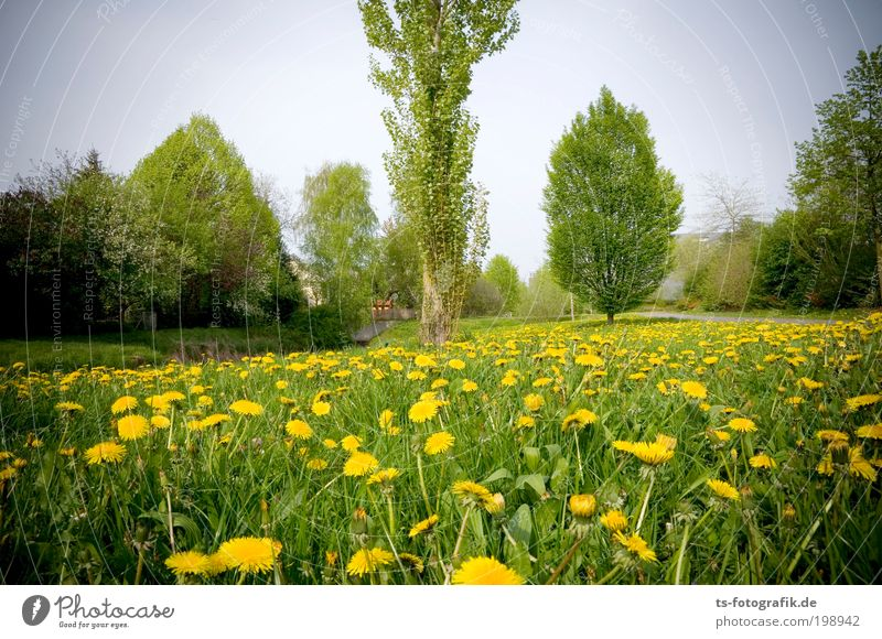 On the Wiesn Relaxation Calm Cure Vacation & Travel Trip Environment Nature Landscape Spring Summer Weather Beautiful weather Plant Tree Dandelion Garden Park