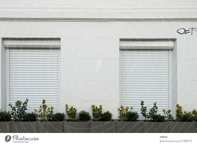Plant White House (Residential Structure) Window Black Wall (building) Graffiti Wall (barrier) Wood Gray Stone Facade Metal Living or residing Fear Arrangement