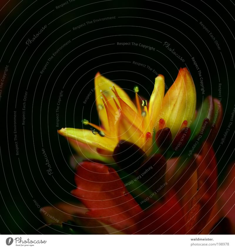 Flower Plant Loneliness Yellow Blossom Esthetic Blossoming Abstract