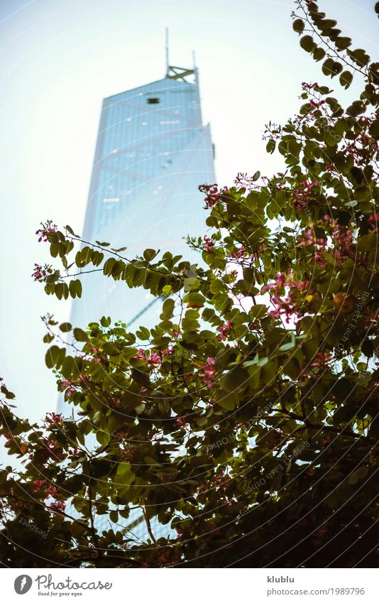 Beautiful blooming tree and skyscraper Vacation & Travel Tree Landscape Flower House (Residential Structure) Street Life Building Tourism Copy Space Trip Modern