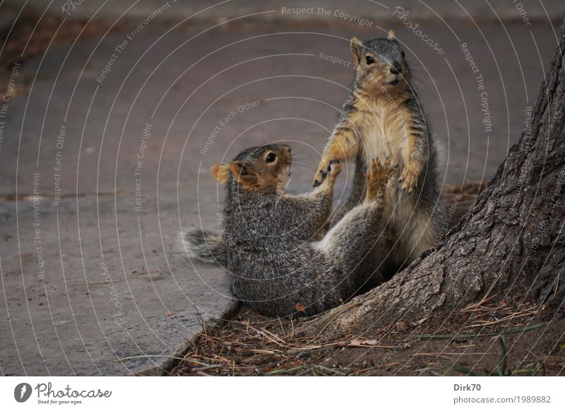 Nature Town Tree Animal Winter Environment Life Spring Lanes & trails Playing Garden Park Pair of animals Wild animal Joie de vivre (Vitality) Cute