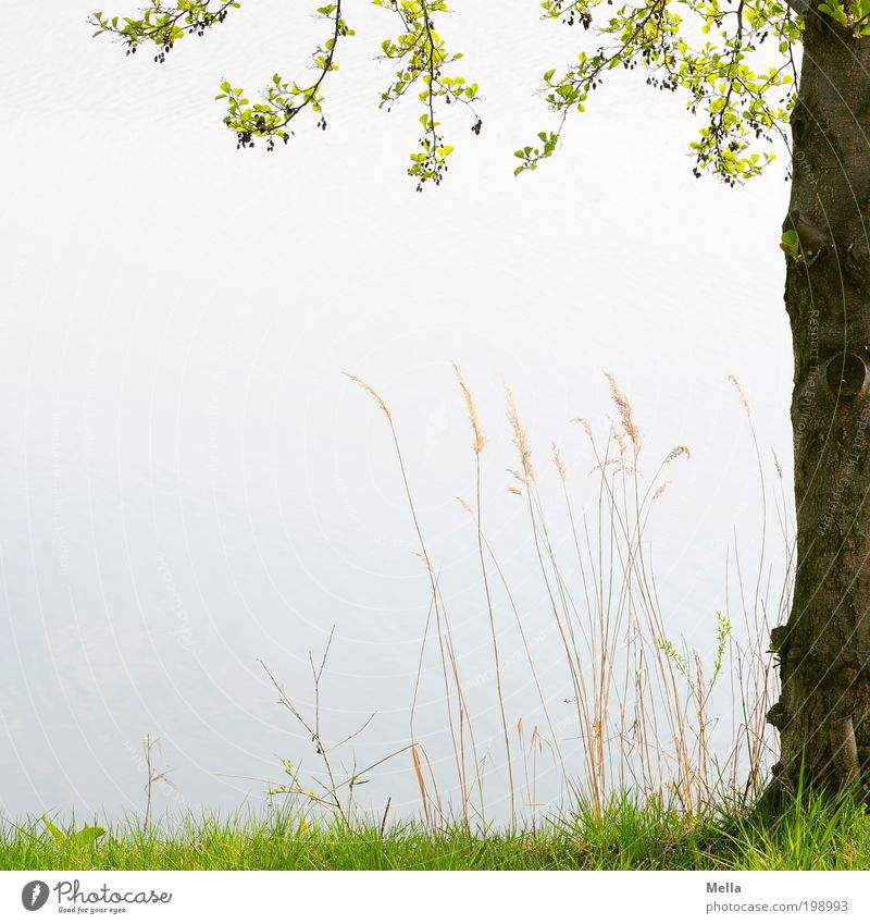 Nature Tree Plant Calm Relaxation Meadow Grass Spring Lake Moody Environment Places Growth Break Romance Natural