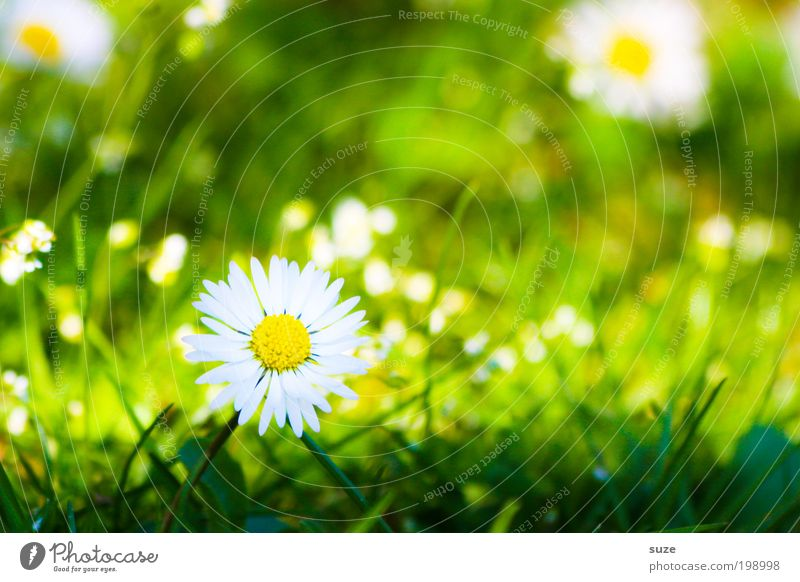 green meadow Garden Environment Nature Landscape Plant Spring Summer Beautiful weather Flower Grass Blossom Daisy Meadow Blossoming Fragrance Esthetic Natural
