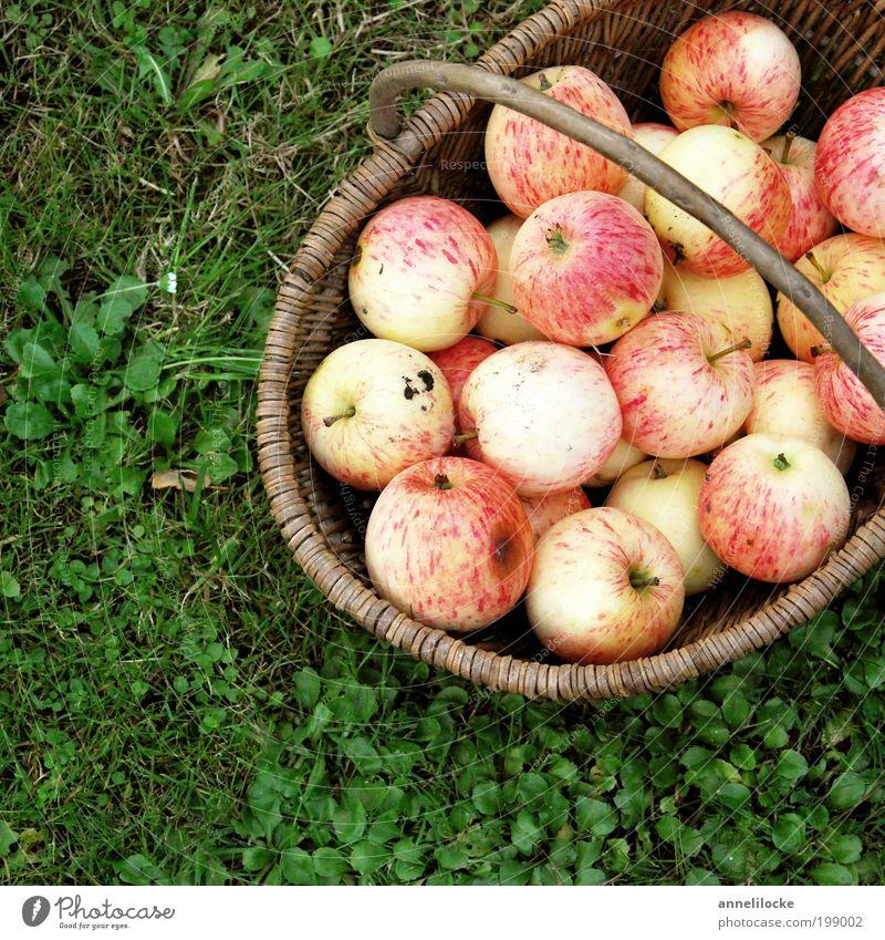 summer apples Food Fruit Apple Nutrition Picnic Organic produce Vegetarian diet Basket Healthy Living or residing Garden Summer Autumn Plant Grass