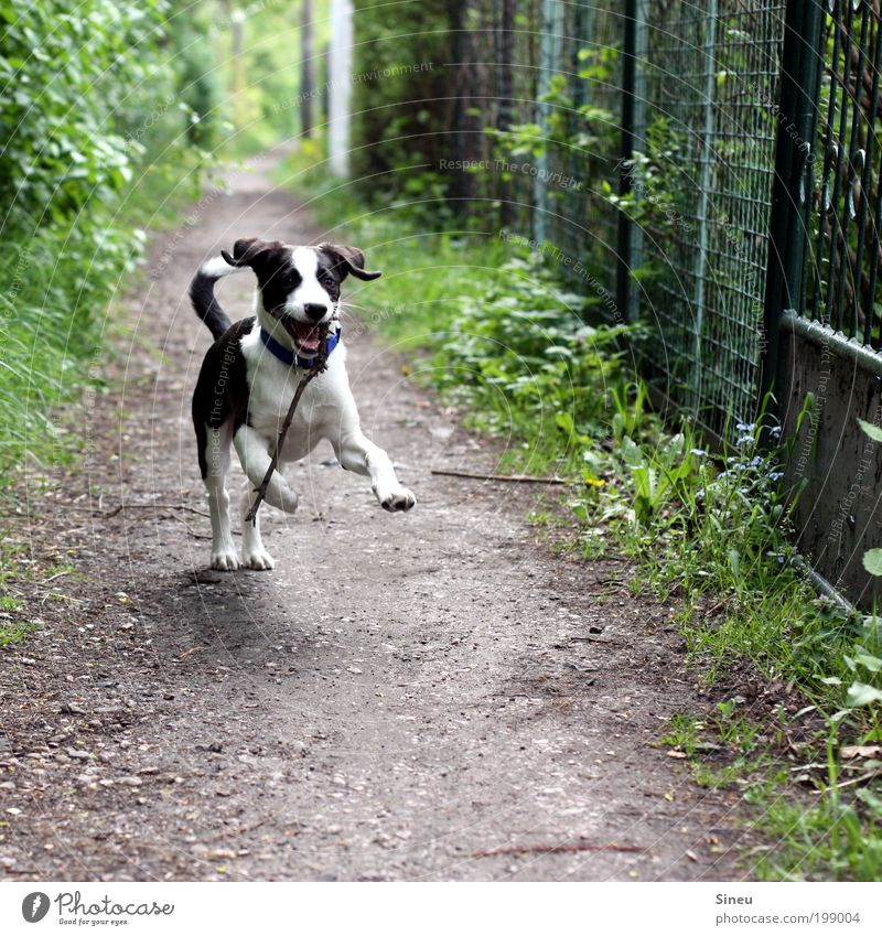 Mr. Schröder in happiness Nature Spring Lanes & trails Dog Puppy Baby animal Stick Walking Playing Happiness Happy Beautiful Funny Cute Wild Black White Joy