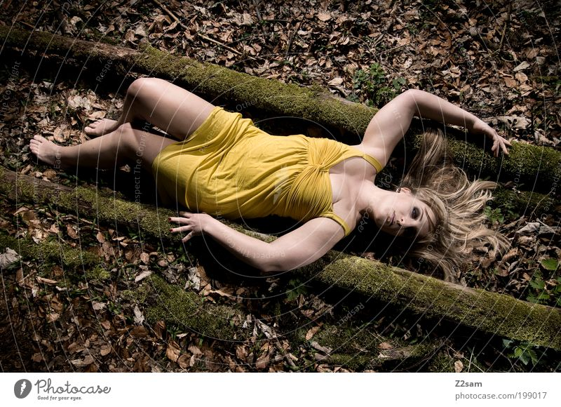 Nature Youth (Young adults) Tree Loneliness Yellow Eroticism Forest Dark Feminine Style Dream Landscape Blonde Adults Elegant