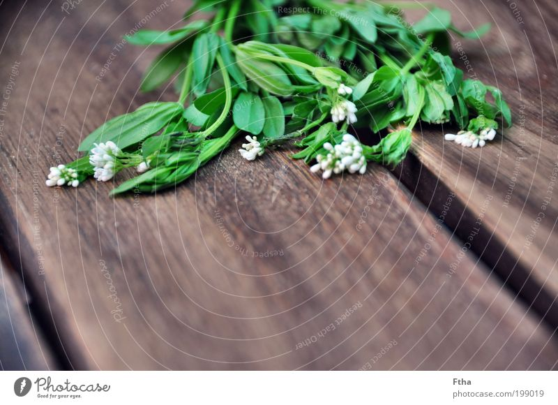 Woodruff Food Herbs and spices Aromatic Green Foliage plant Blossom Medicinal plant ethereal Multicoloured Deserted Copy Space bottom Neutral Background