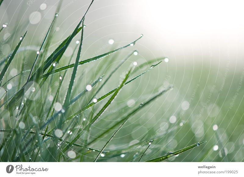 Diamonds Nature Green White Plant Grass Spring Fog Wet Fresh Drops of water Pure Damp Dew Lens flare Water