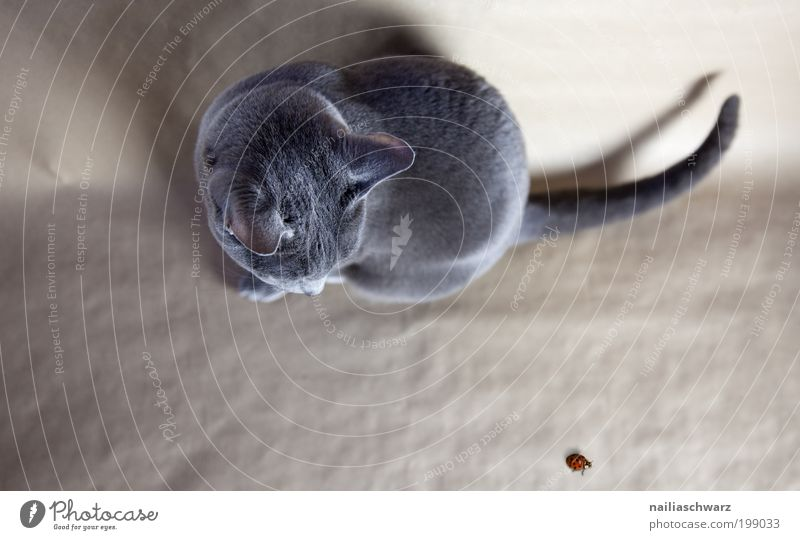 Nature Red Animal Above Gray Cat Brown Funny Elegant Sit Esthetic Near Observe Wild animal Cute Silver