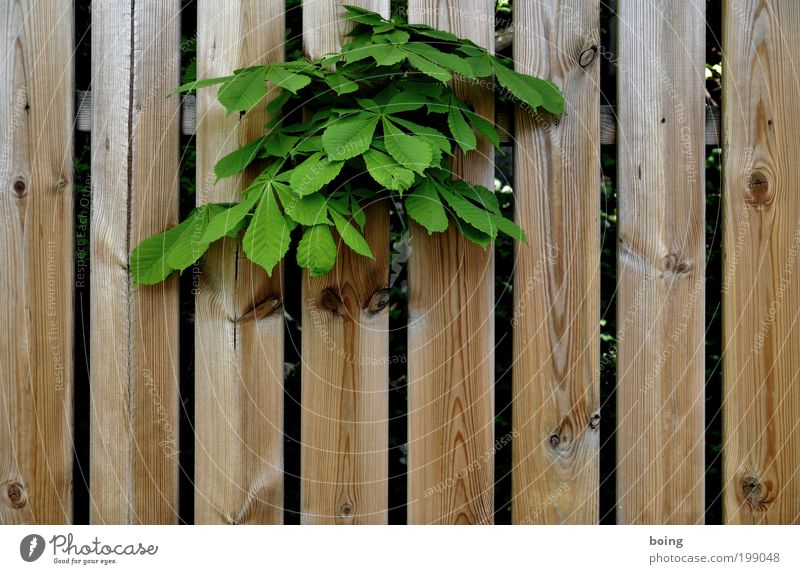 Tree Plant Emotions Garden Park Bushes Fence Chestnut tree Foliage plant Land Feature Wild plant Chestnut leaf