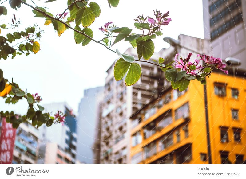 Small urban flower Sky Nature Vacation & Travel Plant Beautiful Green Tree Landscape Flower Architecture Life Building Small Tourism Park Trip