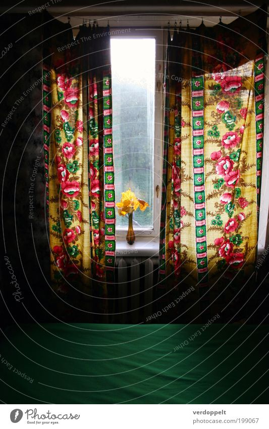 Green Red Flower Calm Yellow Room Pink Flat (apartment) Design Uniqueness Decoration Kitsch Warm-heartedness Trashy Living room Bizarre