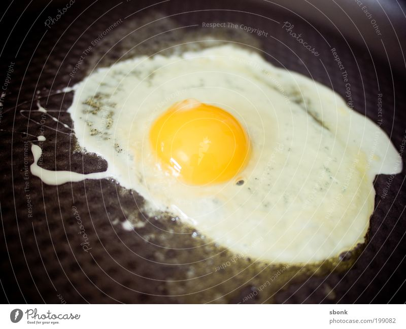 Egg Food Nutrition Breakfast Lunch Organic produce Kitchen Stove & Oven Appetite Delicious Fried egg sunny-side up Pan Butter Colour photo Interior shot